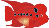 Red fish.png