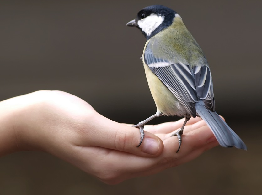 A bird in the hand.jpg