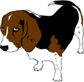 Gerald-G-Copper-the-Beagle.png